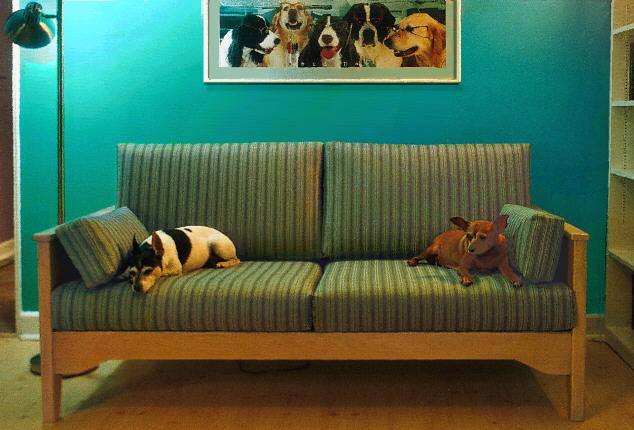 Ordinaire Pet Friendly Couch, Crypton Fabric, With Dogs